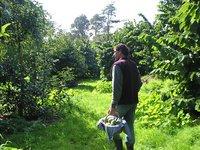 Rich van Alphen in orchard